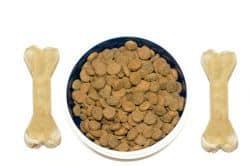 Was Hunde fressen dürfen