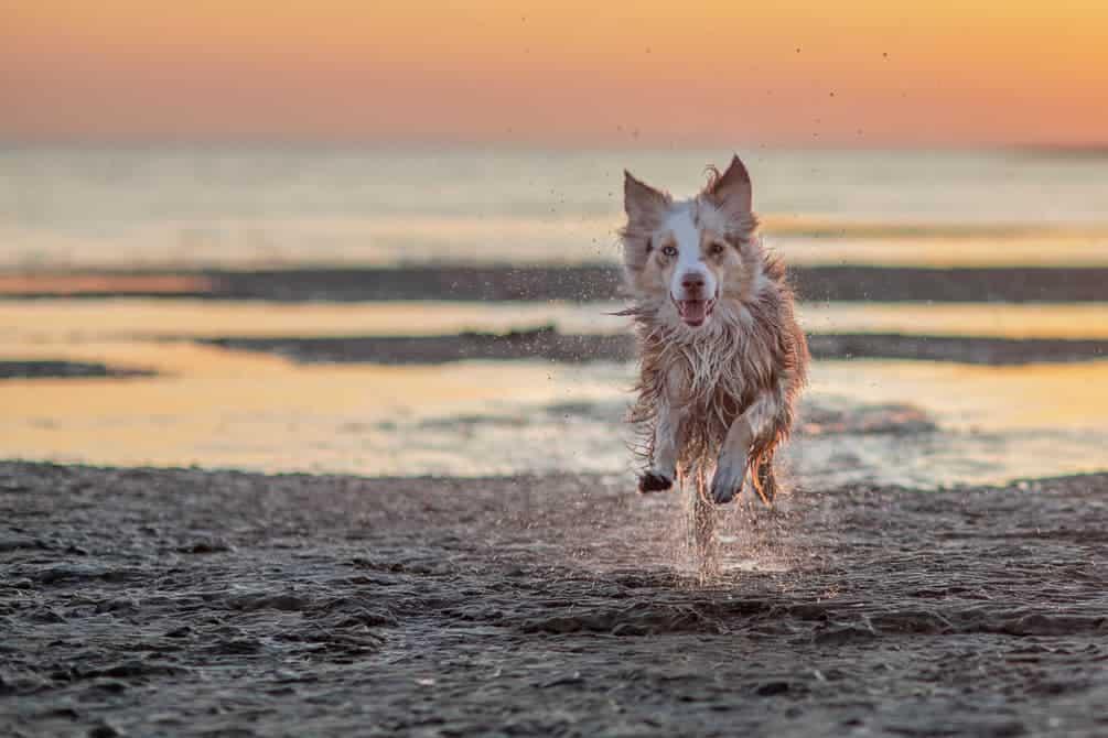 Glücklicher Hund läuft am Strand