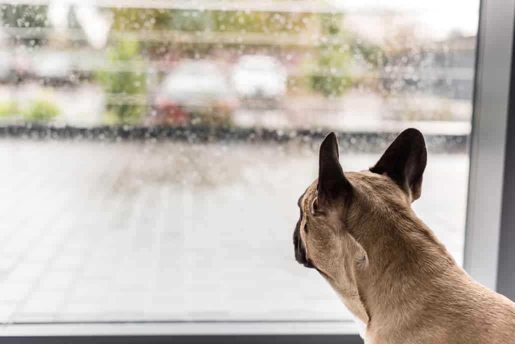 Hund auslasten bei Schlechtwetter