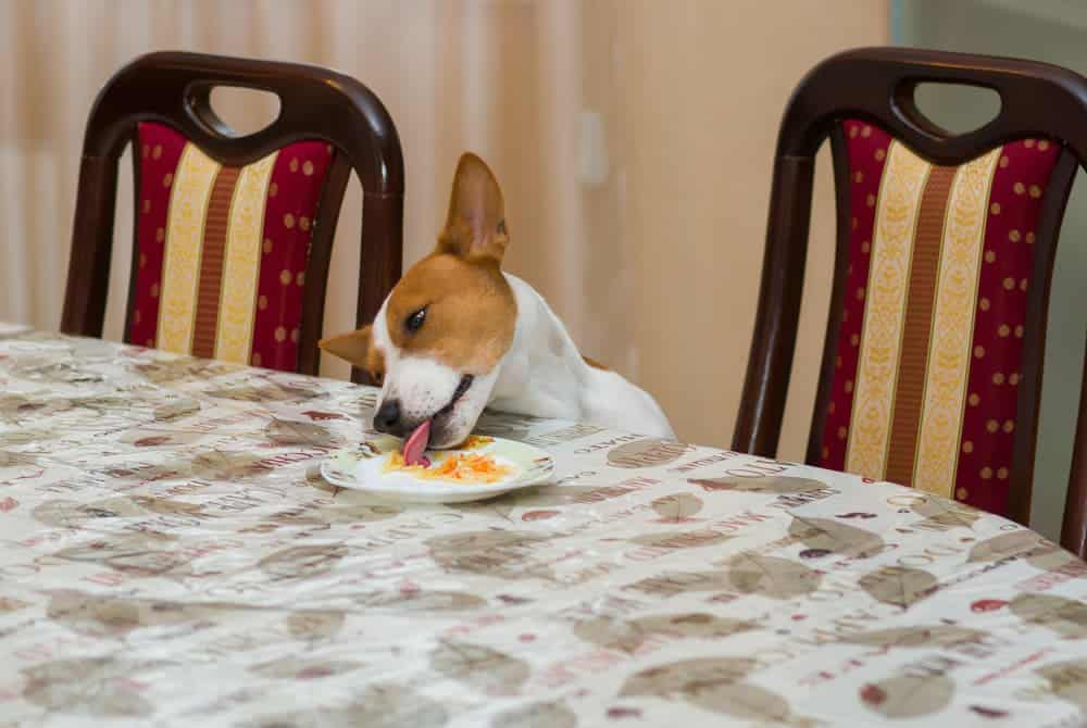 Hund stiehlt Essen vom Tisch