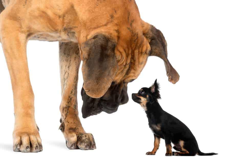 Großer Hund neben kleinem Hund