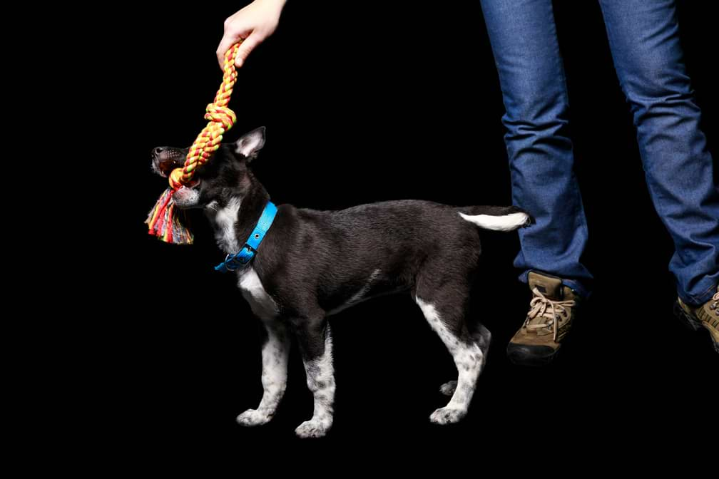Nachhaltig leben mit Hund
