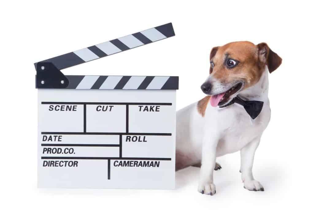 Hund auslasten