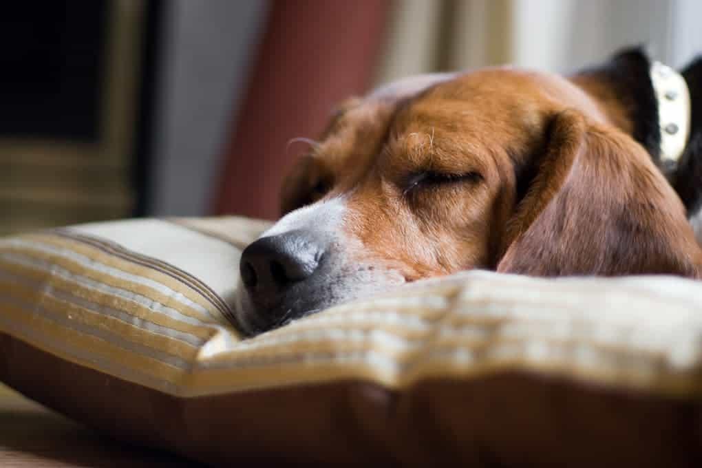 Immunsystem vom Hund stärken