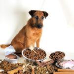 Kaltgepresstes Hundefutter Nass oder Trocken