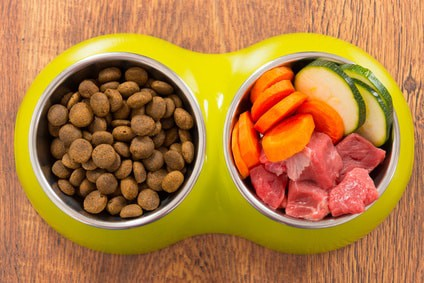 Homemade Dog Food For Yorkie Puppy