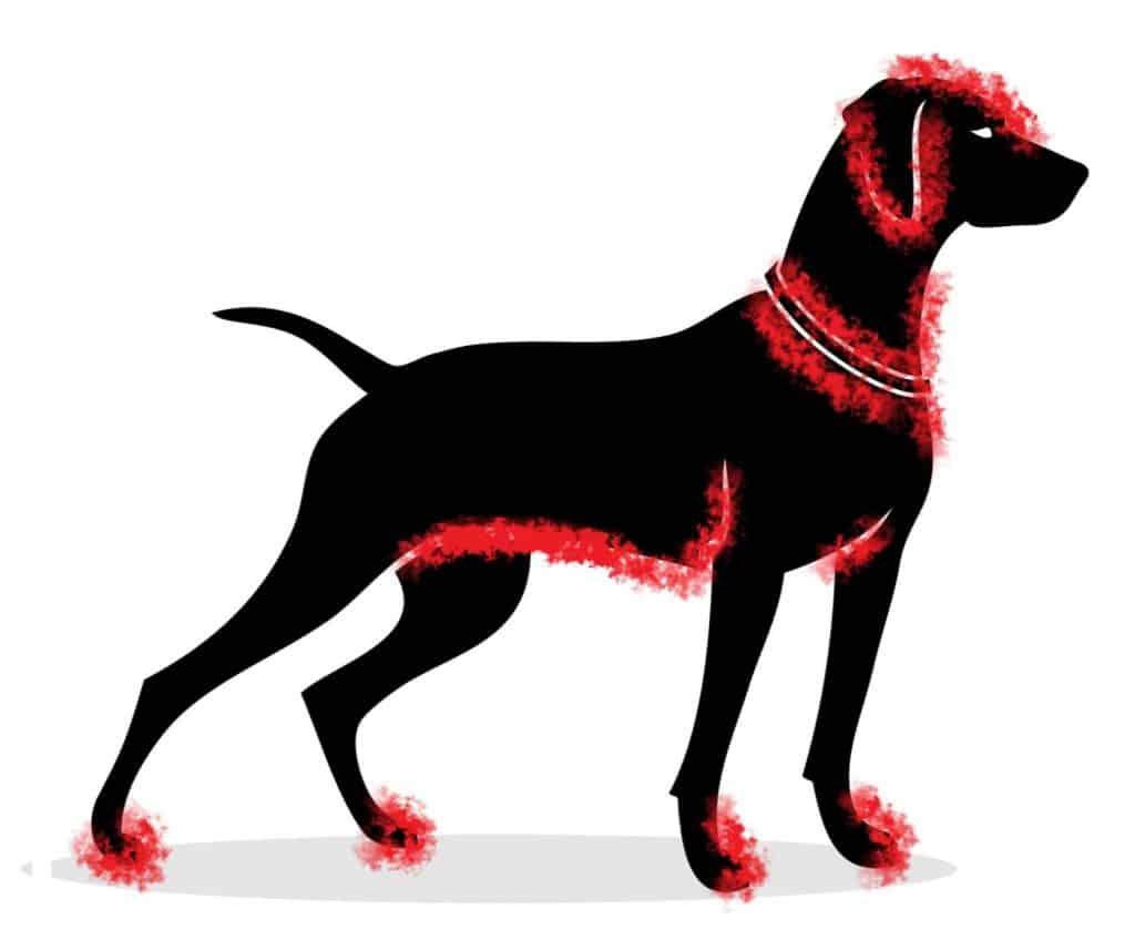 Beliebte Zeckenbissstellen beim Hund