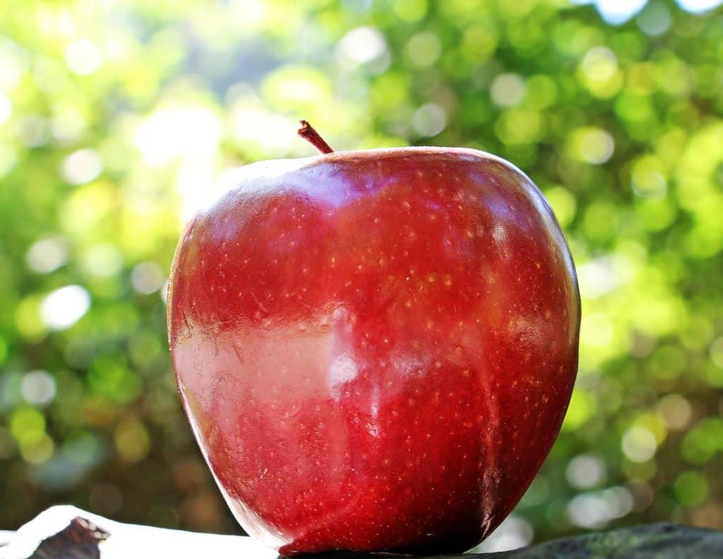 dürfen Hunde Aäpfel essen