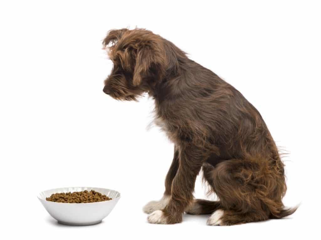 Ein Hund sitzt vor einem Napf mit Trockenfutter und frisst nicht