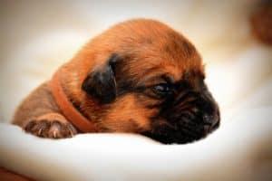Hundefutter für Welpen